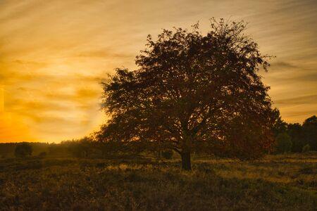 Golden autumn in the L?neburg Heath near Undeloh Stock Photo