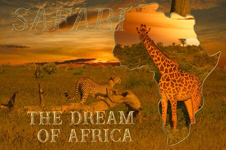 Africa sunrise and sunset with elephants and giraffes Stock Photo
