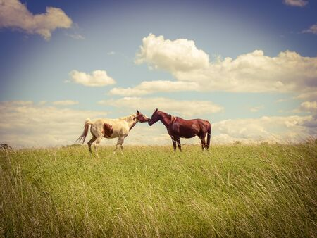 Beautiful horses in the pasture in fine weather