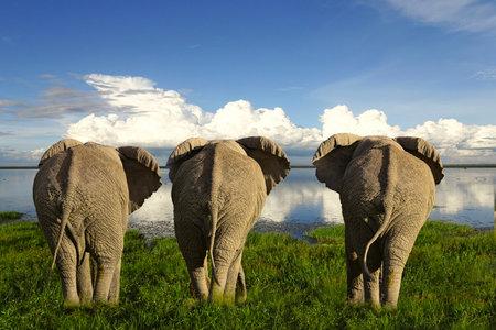 Elephants in Tsavo East and Tsavo West National Park in Kenya