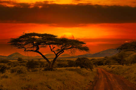Sunset and sunrise in the National Park Tsavo East Tsavo West and Amboseli