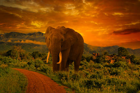 Elephants and sunset in Tsavo East and Tsavo West National Park in Kenya Stock Photo