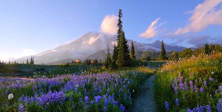 Summer at Mount Rainier National Park, Washington. Stock Photo - 116461612