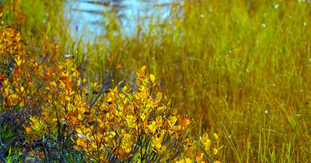 Beautiful Washington Autumn Nature Scenery - North Cascades Region. Stock Photo