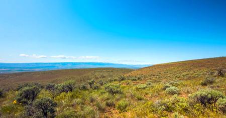 Scenic Nature Washington State - Beezley Hills, Olympic National Park.