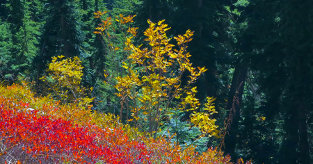 Beautiful Washington Autumn Nature Scenery - Yellow Aster Butte Trail.