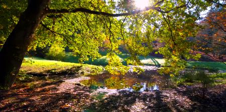 Beautiful Washington Autumn Nature Scenery - Washington Park Arboretum.