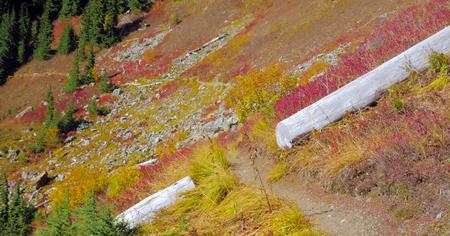 Beautiful Washington Autumn Nature Scenery - Yellow Aster Butte Trail.