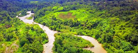 The Amazon rainforest in Manu National Park, Peru. Stock Photo