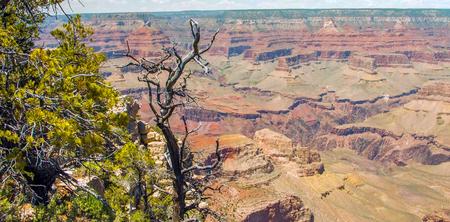 Grand Canyon, South Rim, Arizona, United States of America. 版權商用圖片