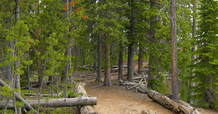 Stock image of Point Sublime Trail, Yellowstone National Park, USA.
