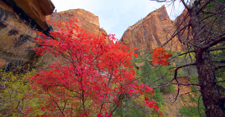 Amazing view of Emerald Pools Trail, Zion National Park, Utah.