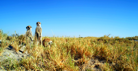 Stock image of wildlife in an African National Park.