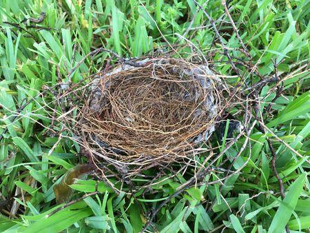 An empty bird nest lying on the grass