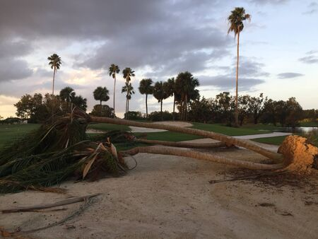 Palm trees toppled after hurricane force winds