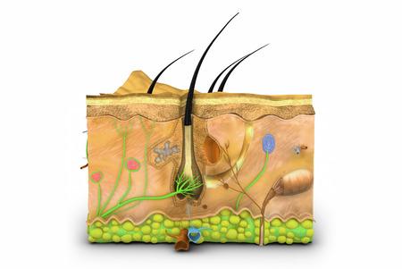 dandruff: Skin Stock Photo