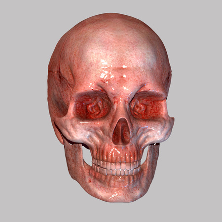 heart muscle cells: Human Skull Stock Photo