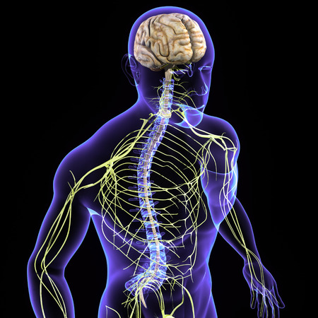 neurological: Nervous system