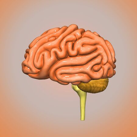 radiography: Brain side