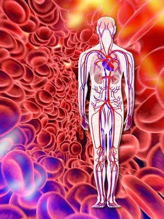 oxygenated: Human circulatory system, artwork LANG_EVOIMAGES