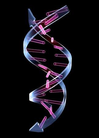 Unzipped DNA molecule, artwork