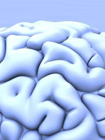 convoluted: Human brain, artwork LANG_EVOIMAGES