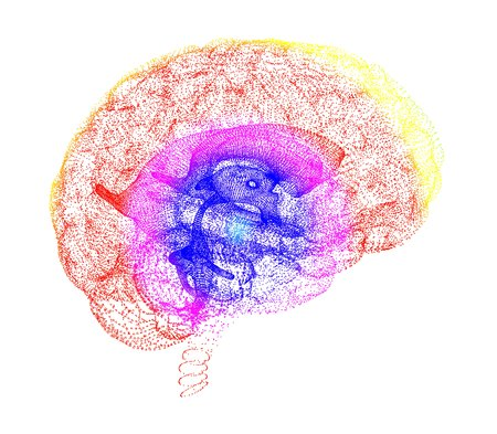 Human brain, conceptual artwork LANG_EVOIMAGES