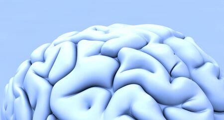 sulcus: Human brain, artwork LANG_EVOIMAGES