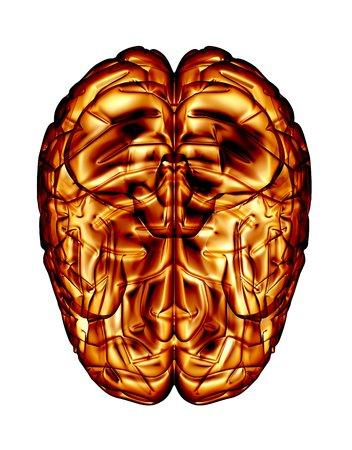 Human brain, artwork LANG_EVOIMAGES