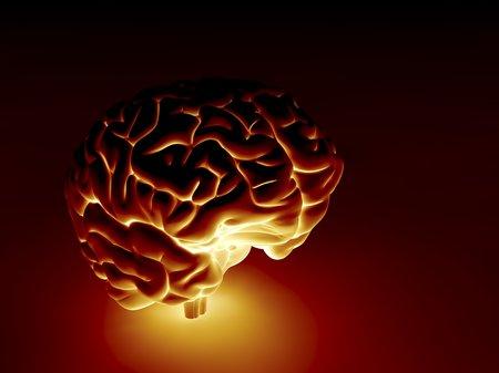 cognicion: Cerebro humano, ilustraciones