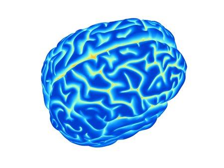 cns: Human brain, computer artwork
