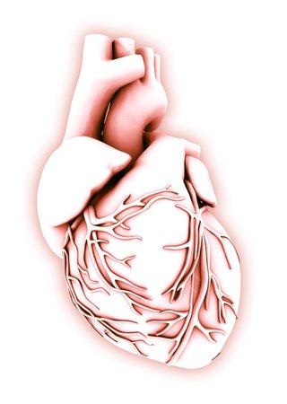 Heart, computer artwork