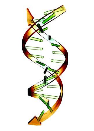 nucleotides: Unzipped DNA molecule, artwork