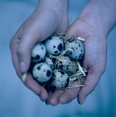 ova: Quail eggs LANG_EVOIMAGES