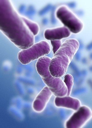 Rod shaped bacillus bacteria LANG_EVOIMAGES