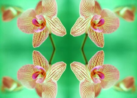 Orchid flowers LANG_EVOIMAGES