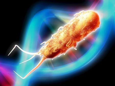 E coli bacterium,computer artwork