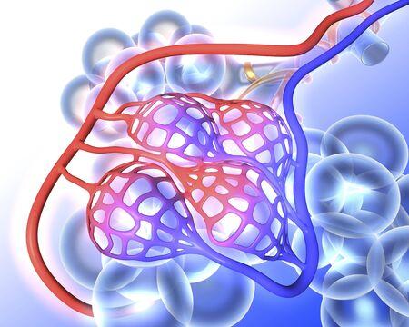 alveolos: alvéolos