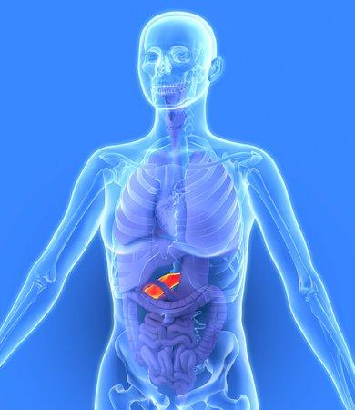 Pancreas, artwork