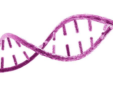 helical: Unzipped DNA molecule,artwork
