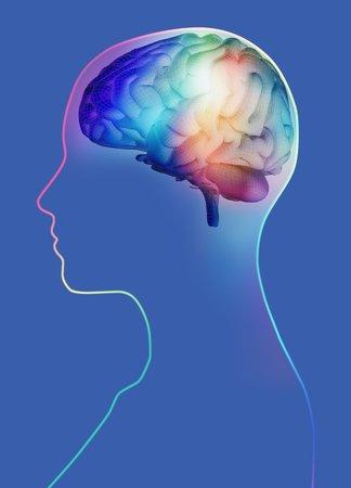 cns: Human brain,artwork