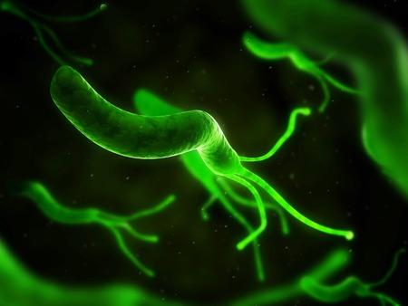 helical: Helicobacter pylori bacterium,computer artwork LANG_EVOIMAGES