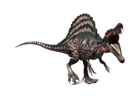 bipedal: Spinosaurus dinosaur,computer artwork.This dinosaur lived 95 to 80 million years ago during the Late Cretaceous period LANG_EVOIMAGES