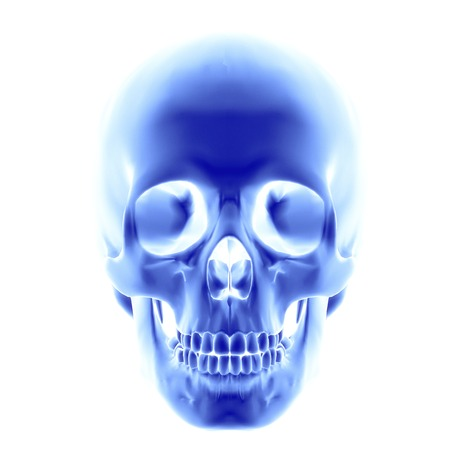 Skull.Computer artwork of an opaque view of a human skull.An adult skull is normally made up of 22 bones and can be subdivided into two parts: the cranium and the mandible (lower jaw bone).The bones of the cranium are joined together by sutures to form a