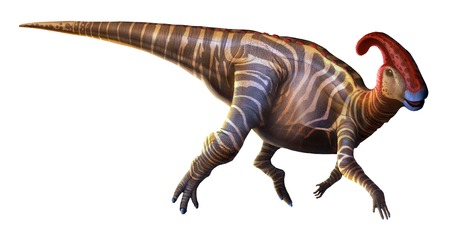 Parasaurolophus (near-crested lizard),first described in 1922,was a dinosaur that lived at the end of the Cretaceous period,around 70 million years ago,in what is now North America.It was a hadrosaurid dinosaur,a diverse family of plant-eating animals w LANG_EVOIMAGES