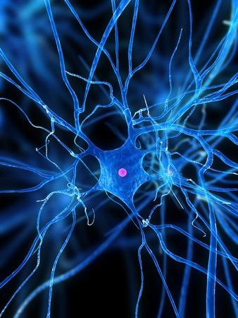 Nerve cell,computer artwork