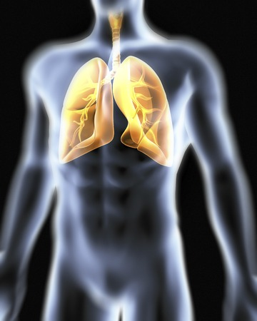 bronchioles: Respiratory system.Computer artwork of a male torso and the respiratory System,showing lungs,bronchus,bronchioles,larynx and windpipe