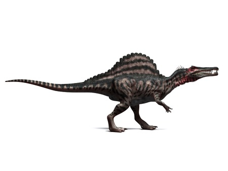 Spinosaurus dinosaur,computer artwork.This dinosaur lived 95 to 80 million years ago during the Late Cretaceous period LANG_EVOIMAGES
