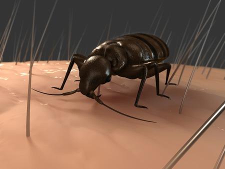 Bedbug (Cimex sp.),computer artwork