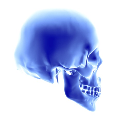 subdivided: Skull.Computer artwork of an opaque view of a human skull.An adult skull is normally made up of 22 bones and can be subdivided into two parts: the cranium and the mandible (lower jaw bone).The bones of the cranium are joined together by sutures to form a